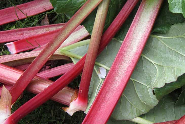 what does rhubarb taste like