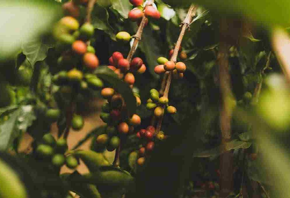 Best Coffee On Amazon